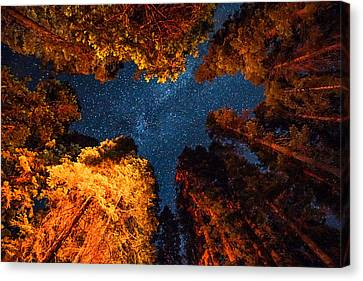 Camping Under The Stars  Canvas Print by Alpha Wanderlust