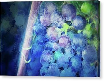 Campos Grapes Canvas Print