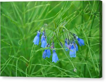 Can You Hear The Blue Bells Canvas Print by Bj Hodges