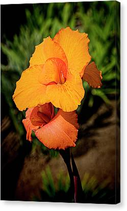 Cana Lily 2 Mission Bay Canvas Print by Kenneth Roberts
