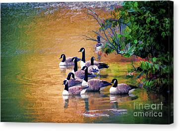Canvas Print featuring the photograph Canada Geese - Autumn At Pandapas Pond by Kerri Farley