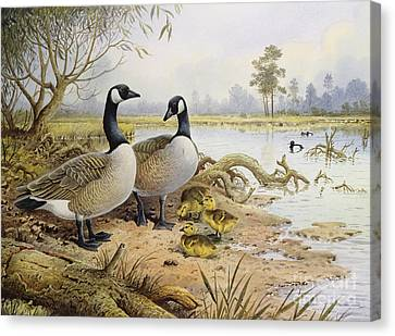 Canada Geese Canvas Print by Carl Donner