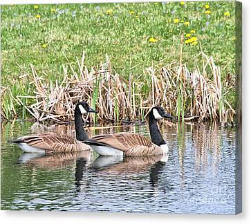 Canvas Print featuring the photograph Canada Geese by Debbie Stahre