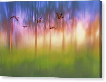 Canada Geese - Flight - Sunset Canvas Print by Nikolyn McDonald