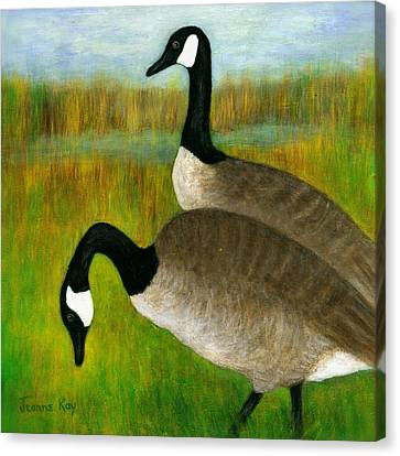 Canada Geese Grazing  Canvas Print by Jeanne Kay Juhos