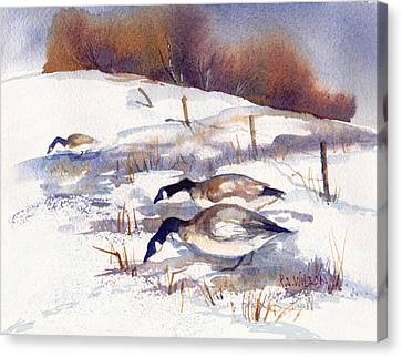 Canada Geese In Stubble Field II Canvas Print by Peggy Wilson