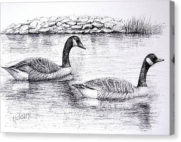 Canada Geese Canvas Print by Terence John Cleary