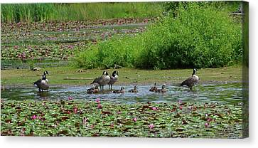 Impressionism Canvas Print - Canada Goose And Family  by Michael Mrozik