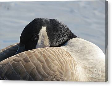 Canada Goose Head Canvas Print by Mary Mikawoz