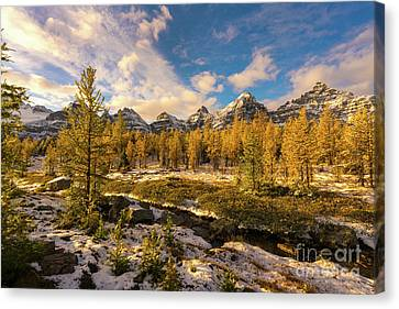 Canoe Canvas Print - Canadian Rockies Golden Larches In Larch Valley by Mike Reid