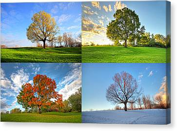 Canadian Seasons Canvas Print by Mircea Costina Photography