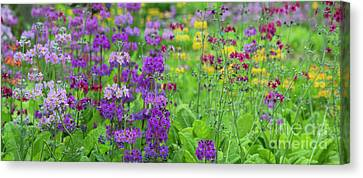 Candelabra Primula Panoramic Canvas Print by Tim Gainey