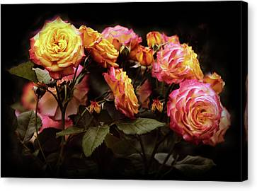 Candlelight Rose  Canvas Print by Jessica Jenney