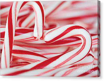 Candy Cane Love Canvas Print by Kim Fearheiley