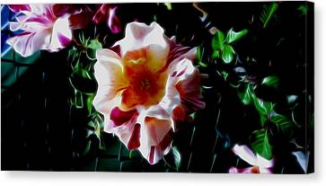 'candy Land' Rose In Abstract Canvas Print