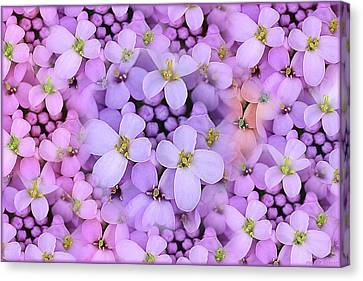 Candytuft Canvas Print by Mary P. Siebert