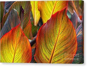 Canna Beleave The Colors Canvas Print