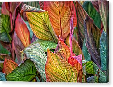 Canna Canvas Print by James Barber