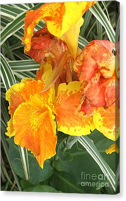 Canna Lilies Canvas Print by David Bearden