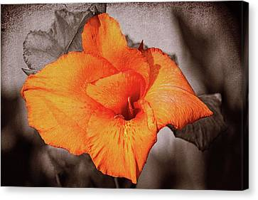 Canna Lily 1 Mission Bay Canvas Print by Kenneth Roberts