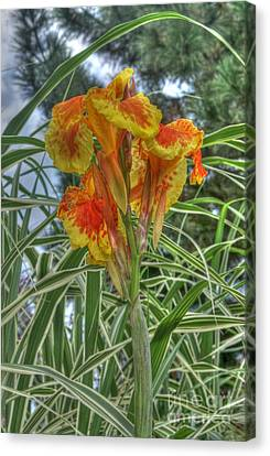Canna Lily Canvas Print by David Bearden