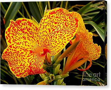 Canna Lily Canvas Print by Kaye Menner