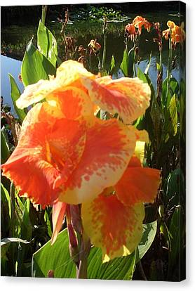 Canna Lily Light Canvas Print by Warren Thompson
