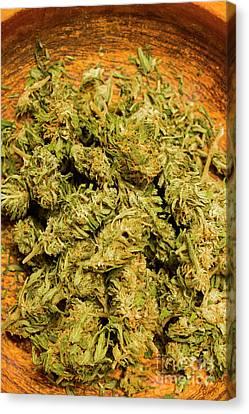 Cannabis Bowl Canvas Print