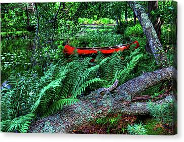 Canoe Among The Ferns Canvas Print by David Patterson