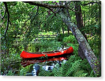 Canoe Under The Canopy Canvas Print by David Patterson