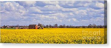 Canola Field Canvas Print by John Edwards