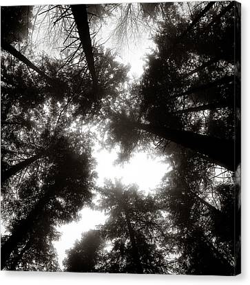 Canopy Canvas Print by Dave Bowman