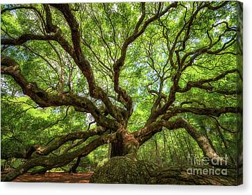 Canopy Of Color At Angel Oak Tree  Canvas Print
