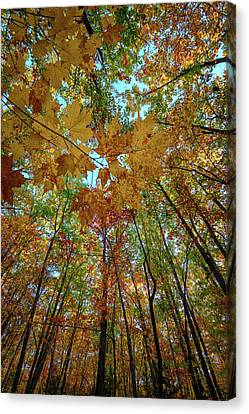 Canopy Of Color Canvas Print by Rick Berk