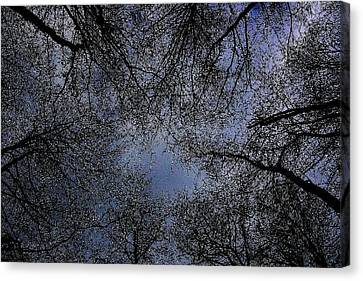 Canopy Canvas Print by Votus