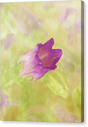 Canterbury Bell Flower Painted 2 Canvas Print by Sandi OReilly