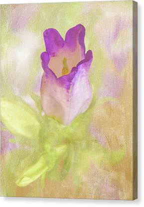 Canterbury Bell Flower Painted Canvas Print by Sandi OReilly