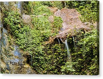 Canyon Stream Canvas Print by Milton Irvin
