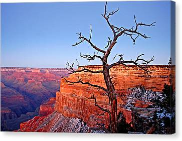 Canyon Tree Canvas Print by Peter Tellone