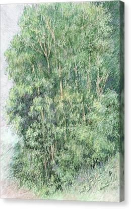 Canyon Trees Colorized Canvas Print