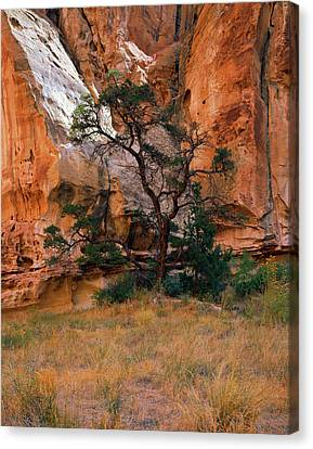 Canyon View With Tree Canvas Print