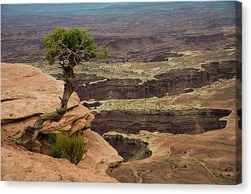 Canvas Print featuring the photograph Canyonlands by Gary Lengyel