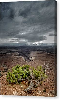 Canyonlands Juniper Canvas Print by Joseph Smith