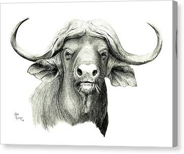 Cape Buffalo Canvas Print by Mary Rogers