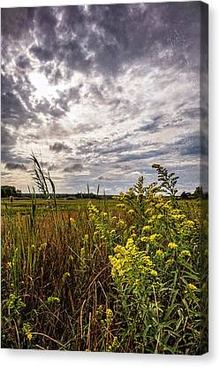 Cape Cod Marsh 4 Canvas Print by Frank Winters