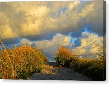 Cape Cod Sand Dunes Canvas Print