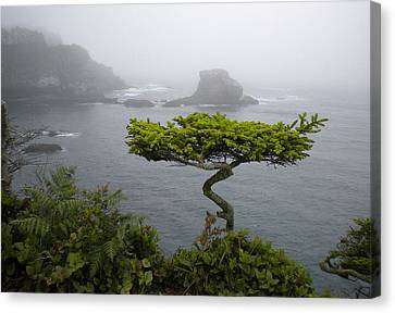 Cape Flattery Noble Canvas Print