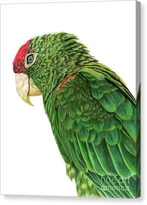 Cape Parrot Canvas Print by Angela Morris