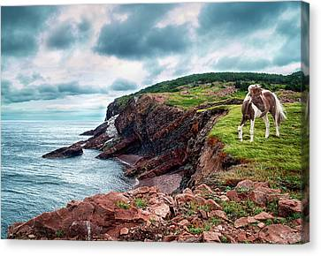 Tracy Munson Canvas Print - Cape St. Lawrence by Tracy Munson