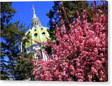 Capitol In Bloom Canvas Print by Shelley Neff
